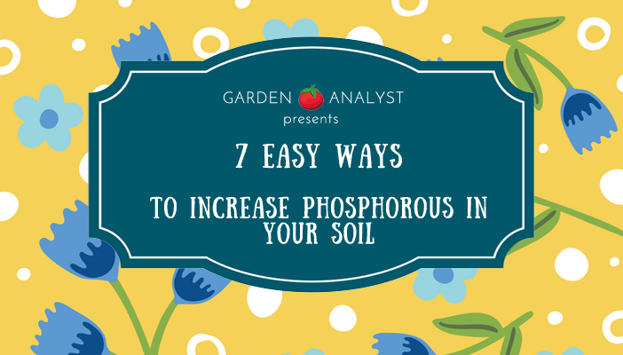 7 easy ways to increase phosphorous in soil