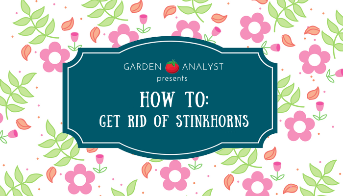 how to get rid of stinkhorns