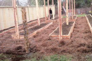 pine staw mulch around garden beds