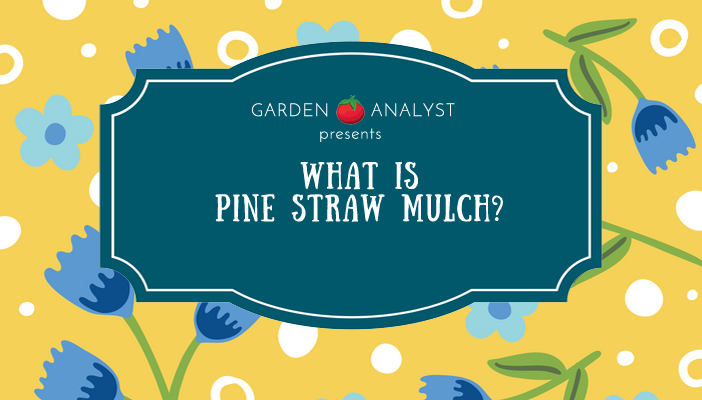what is pine straw mulch