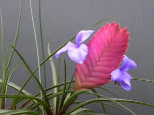 pink quill with blooming flowers