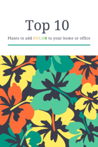 Top 10 Plants To Add Color To Your Home or Office