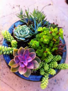 A Mix of Colorful Succulents