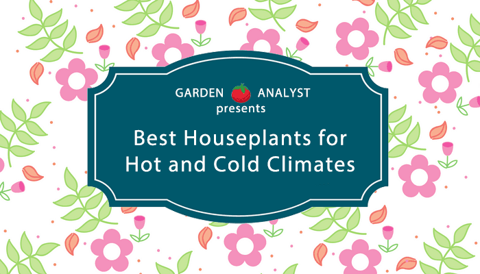 best-houseplants-little-maintenance