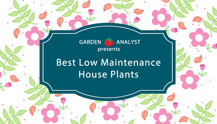 low-maintenance-houseplants
