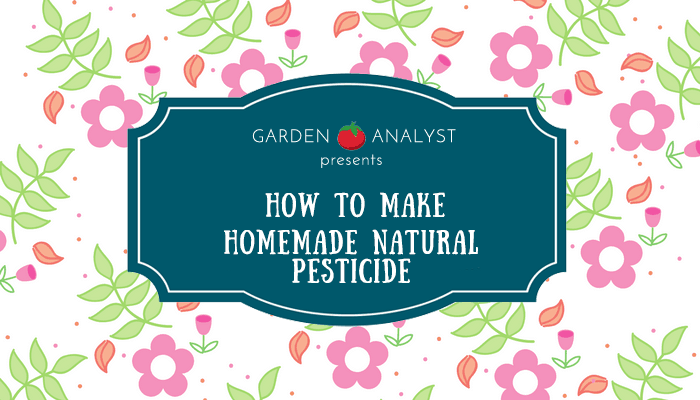 homemade natural pesticides